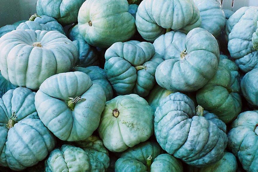 OHallorans_bluepumpkins