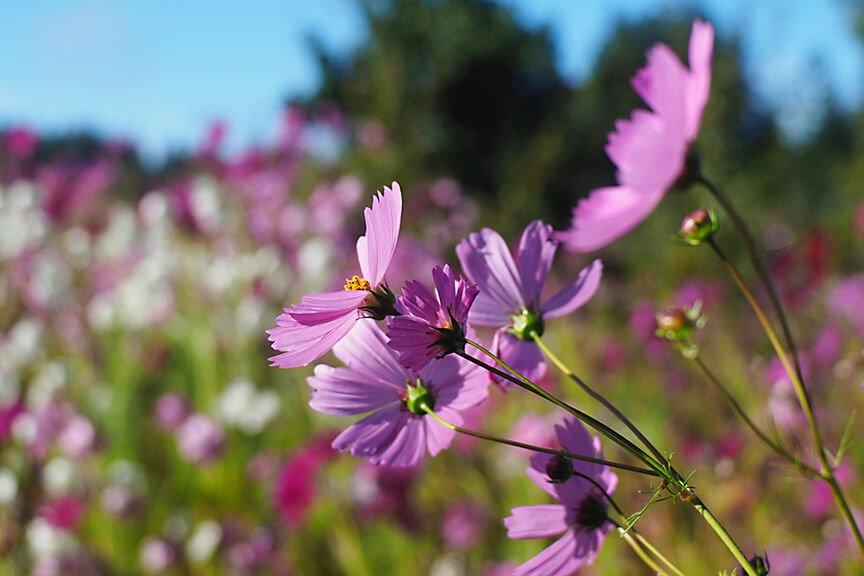 OHallorans_flowers1