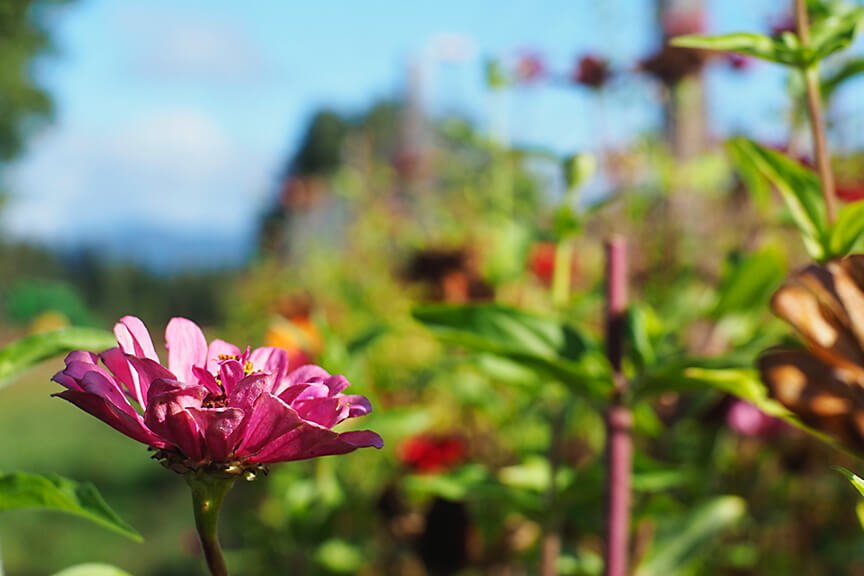 OHallorans_flowers3