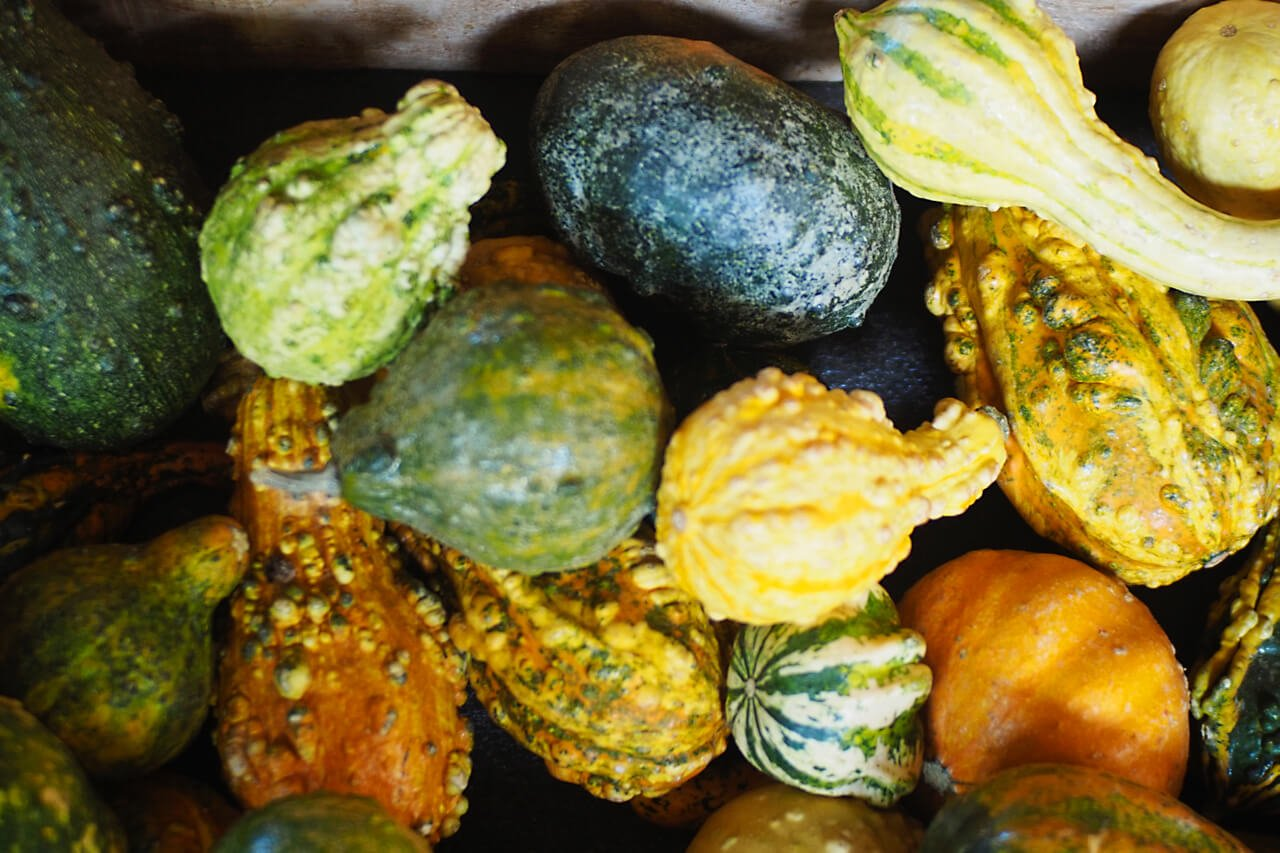 OHallorans_gourds2