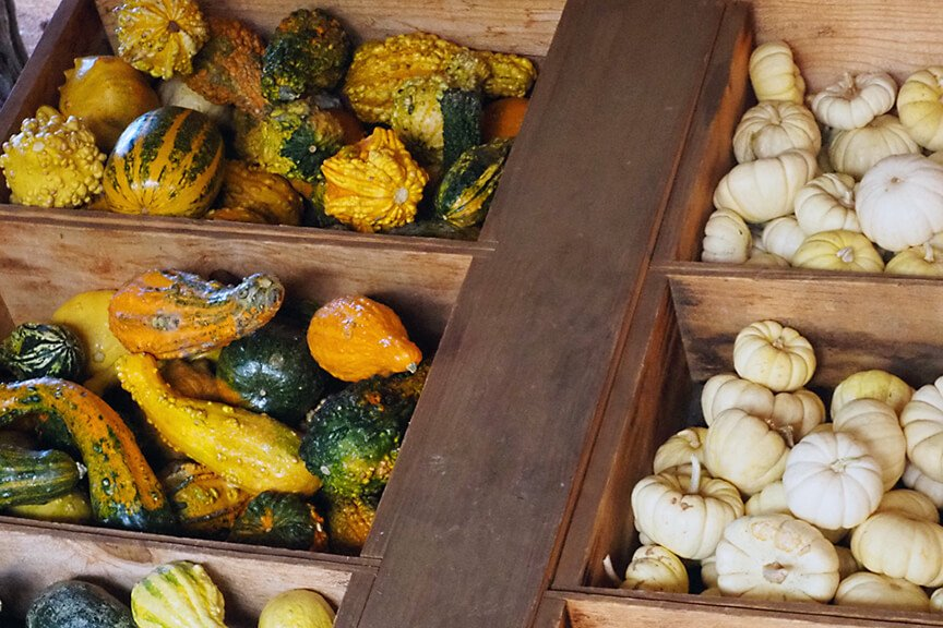 OHallorans_gourds3