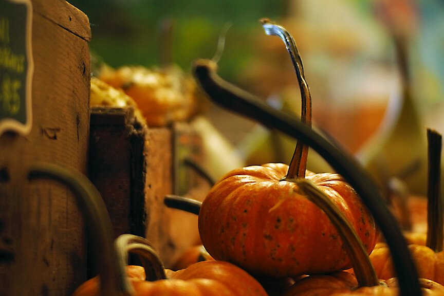 OHallorans_gourds5