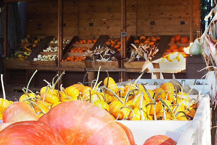 OHallorans_pumpkinsgourds